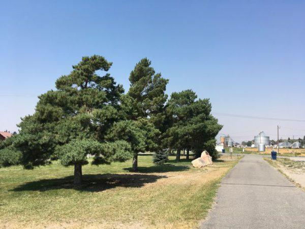 木陰もあるので、木洩れ日の観測も可能